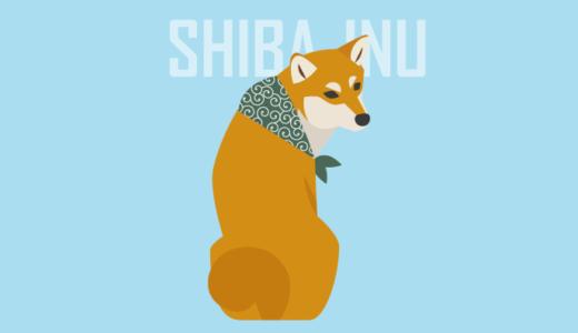 Shiba Inu looking back