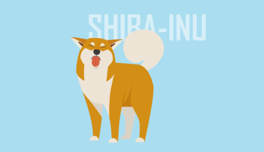 Shiba Inu putting out his tongue